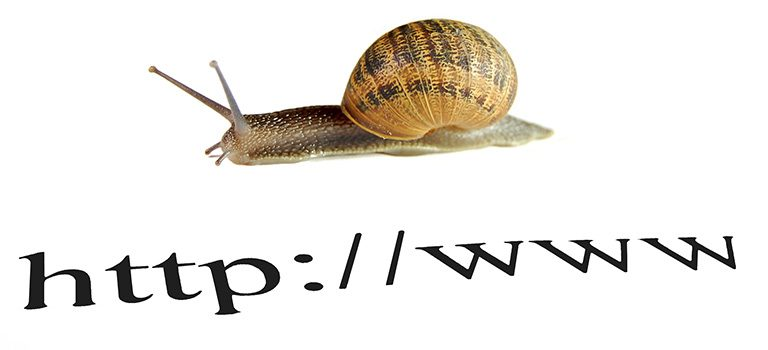 Internet Speed, Snail white background